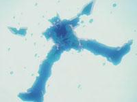 Cell es destruído por el Kame Hame Ha de Son Gohan